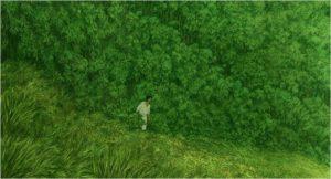 Die rote Schildkroete_Bambuswald